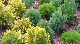Лиственные деревья и лиственные кустарники