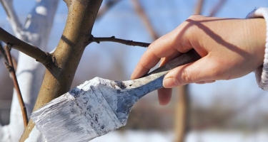 Особенности подготовки сада к зимнему сезону